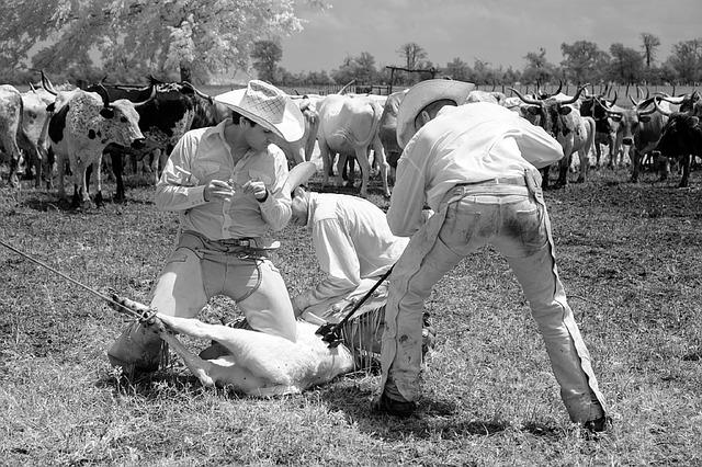 cowboys branding iron